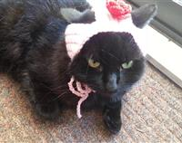 Crochet Cat Rose Hat