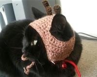 Reindeer hat for cat