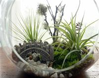 Woodlands Air Plant Terrarium