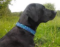 Paua Fabric Dog Collar